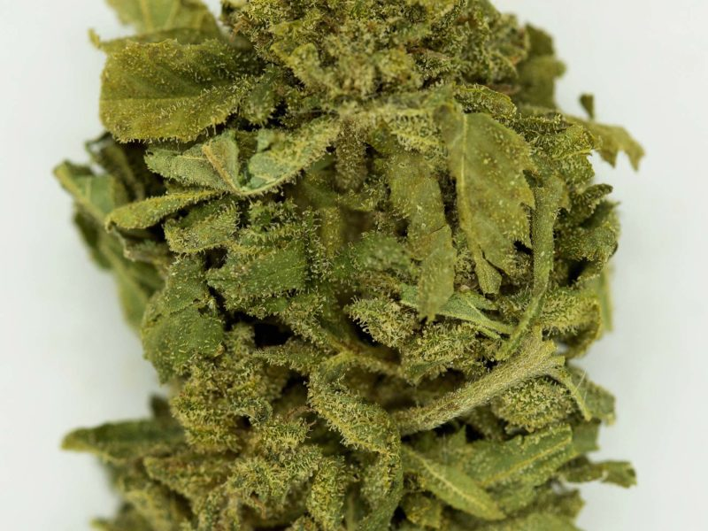 Special Cheese CBD